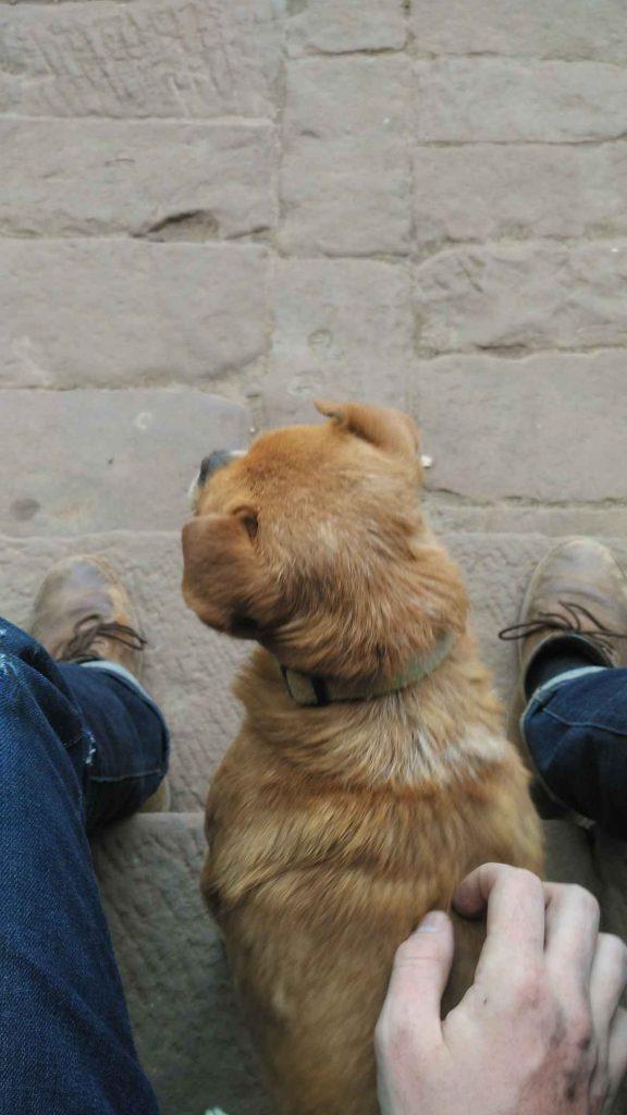 Local stray dog