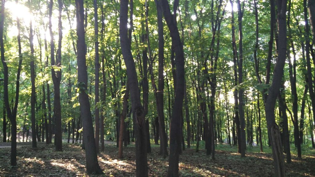 Further south, there's a second and less-maintained park – but I much preferred this one, it feels like you escape from civilization for a few hours. Peaceful green forest and overgrown paths, you would never expect to find this in the center of Moscow