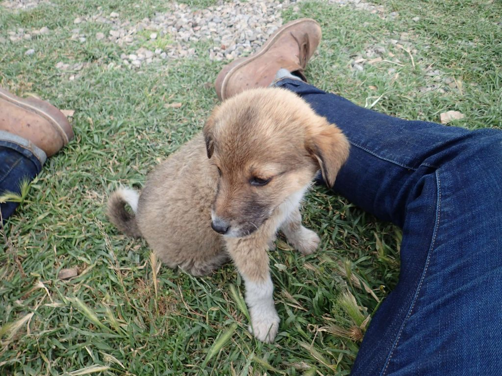 A playful puppy somewhere on the way back to Tbilisi