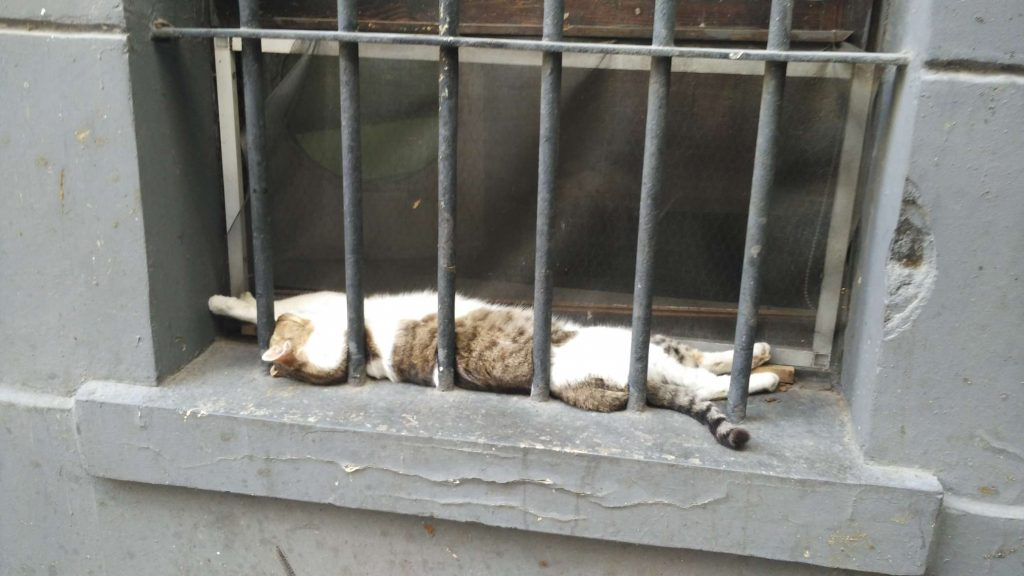 One of Istanbul's many stray cats making the most of the warmer weather. They're something of an institution: very well cared for (you see little mountains of cat food everywhere), with poetry, murals, and all sorts of art dedicated to them