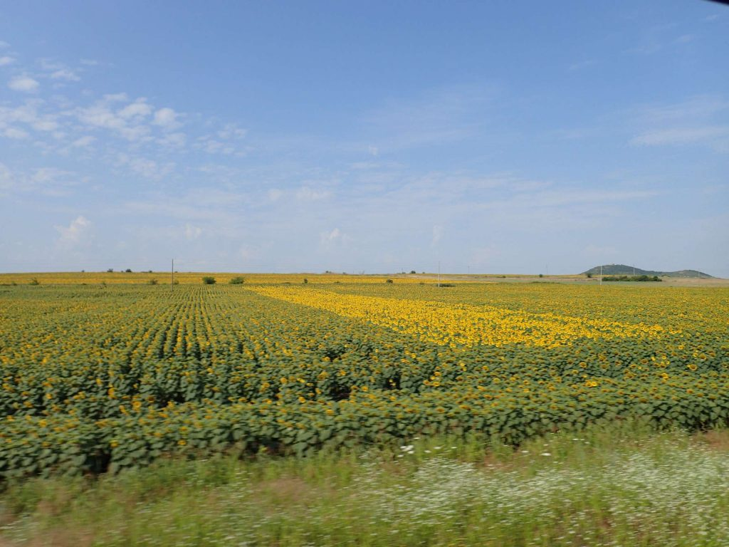 The sunflower fields were lovely, though